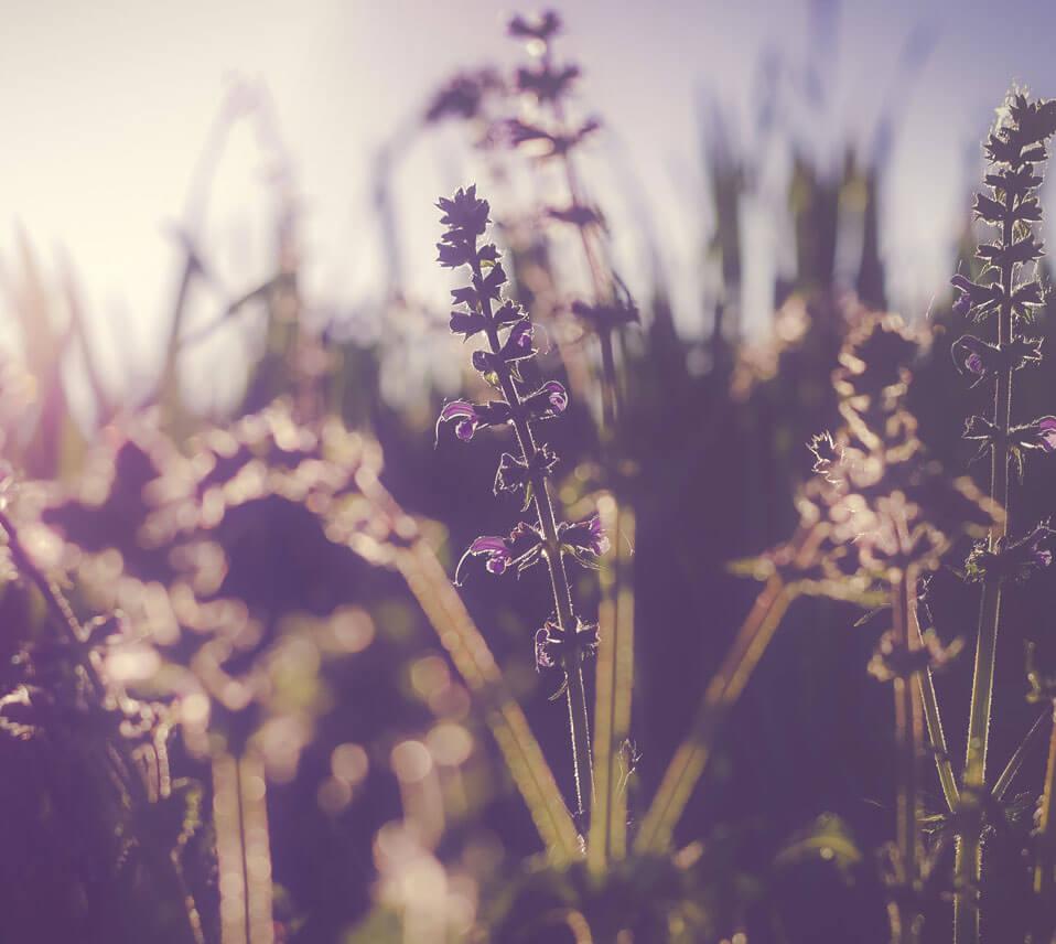 Seasonal Allergies II - Dr. Michelle Jackson Naturopathic Physician
