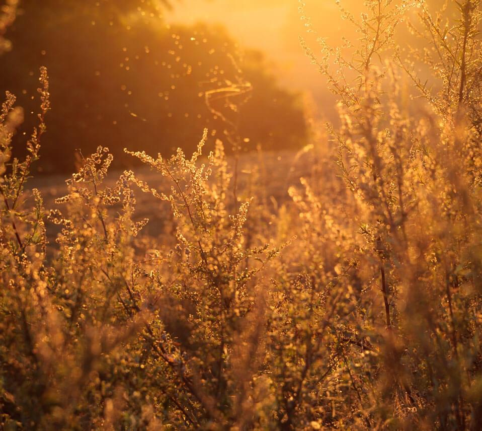 Seasonal Allergies - Dr. Michelle Jackson Naturopathic Physician